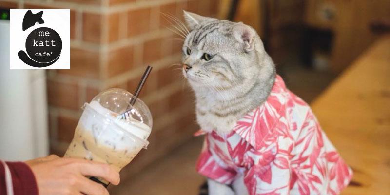 ส่วนลด 10% สำหรับเครื่องดื่มพรีเมี่ยม ที่ Me Katt Cafe จ.พิษณุโลก