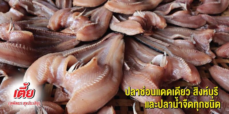 รับฟรีปลาแม่น้ำ 1 ถุง เมื่อซื้อสินค้าครบ 2,000 บาทขึ้นไป ที่ร้านเตี้ย (สุพัตรา สุขประเสริฐ) จ.สิงห์บุรี